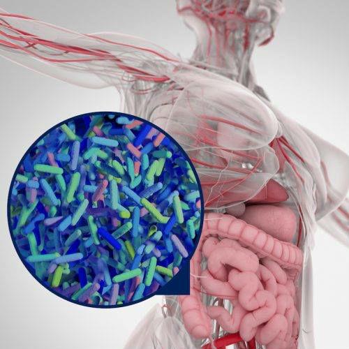 afbeelding dikke darm bifidum bacterien