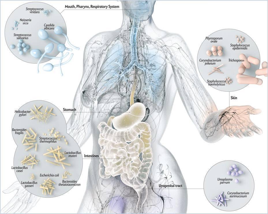 microbioom op huid, darmen, longen en mond