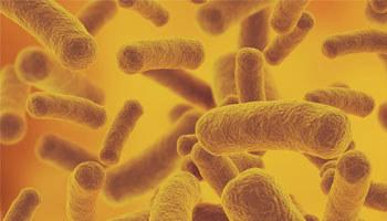 ontwikkelingen probiotica