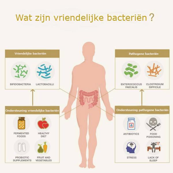 vriendelijke bacteriën